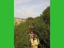 stammesaktion2010(19)